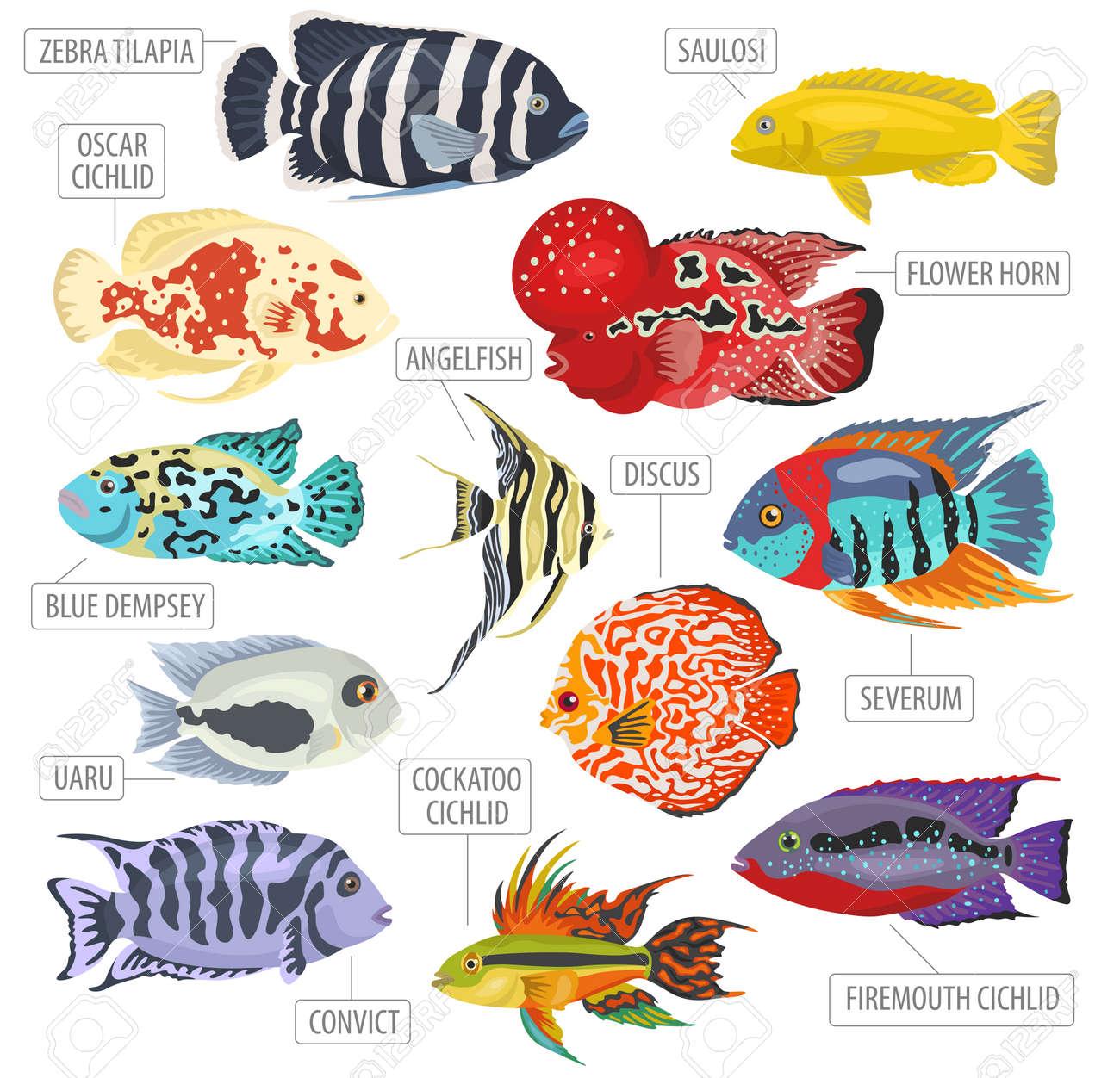 freshwater aquarium fishes breeds icon set flat style isolated rh 123rf com Arowana Fish Jack Dempsey Fish