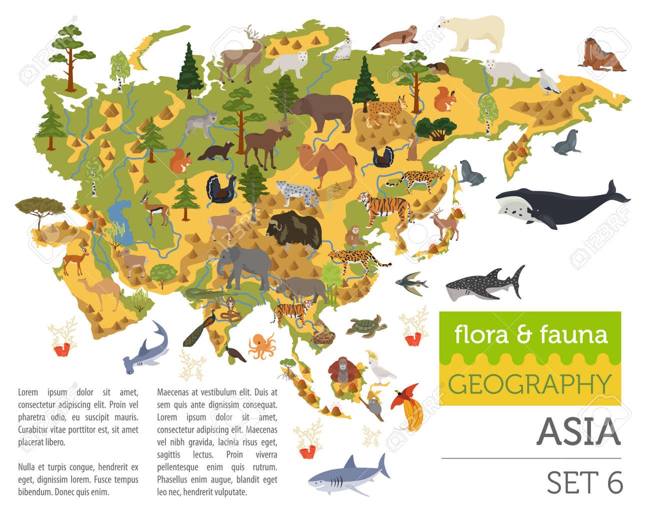 Big Map Of Asia.Flat Asian Flora And Fauna Map Constructor Elements Animals