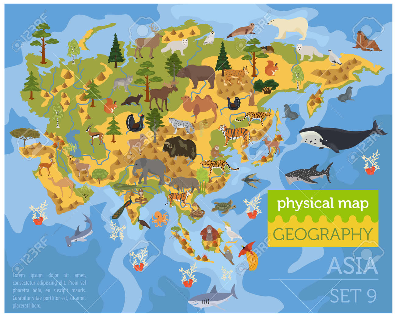 flat asian flora and fauna map constructor elements animals birds and sea life isolated