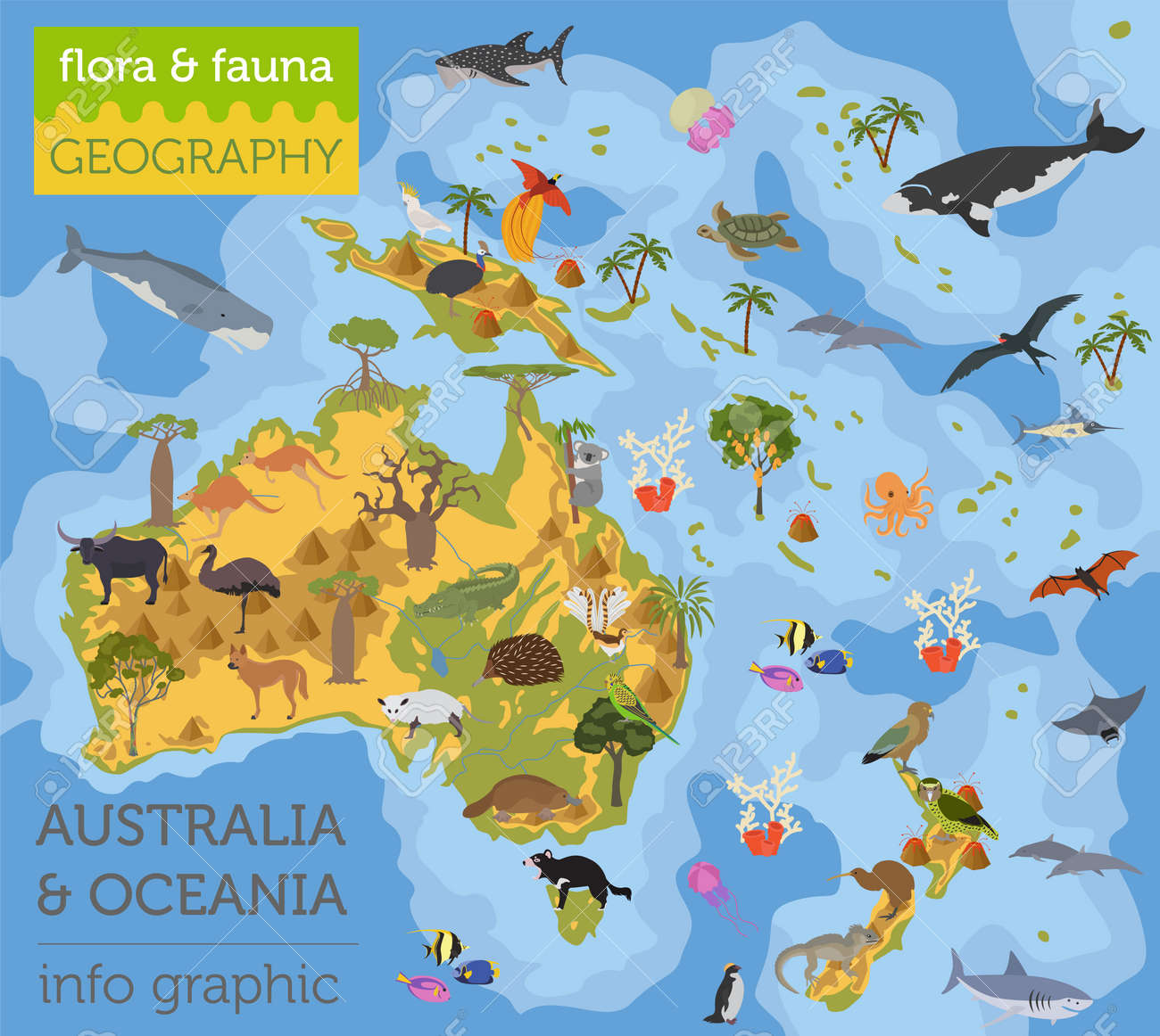 australia and oceania flora and fauna map flat elements animals birds and sea