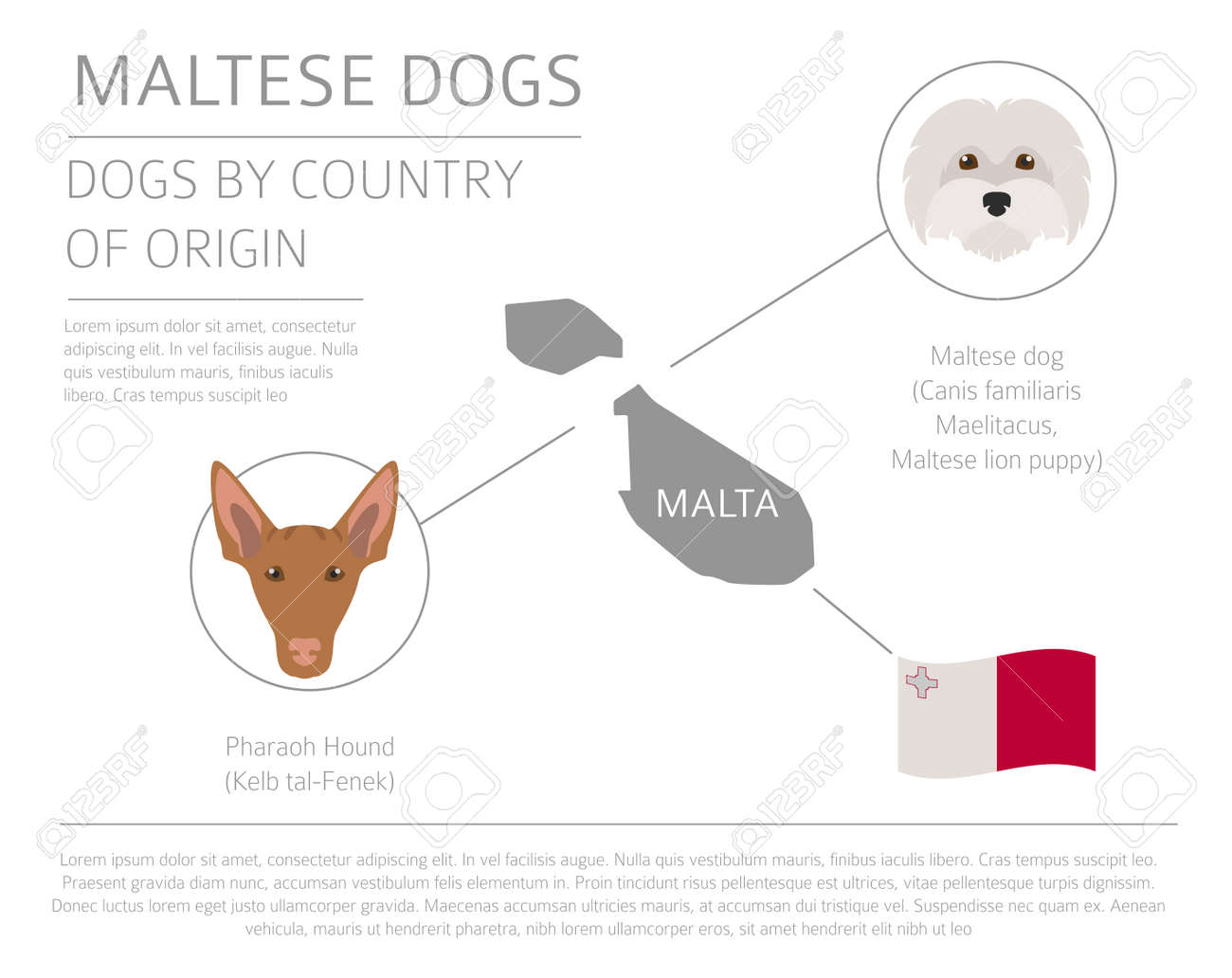 Dogs By Country Of Origin. Maltese Dog Breeds. Infographic Template ...