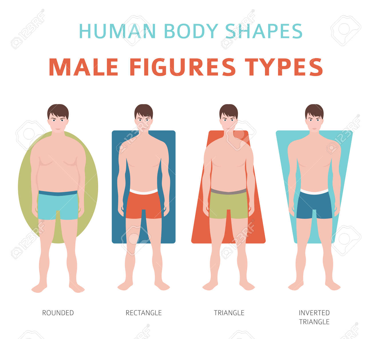 Human body shapes  Male figures types set  Vector illustration