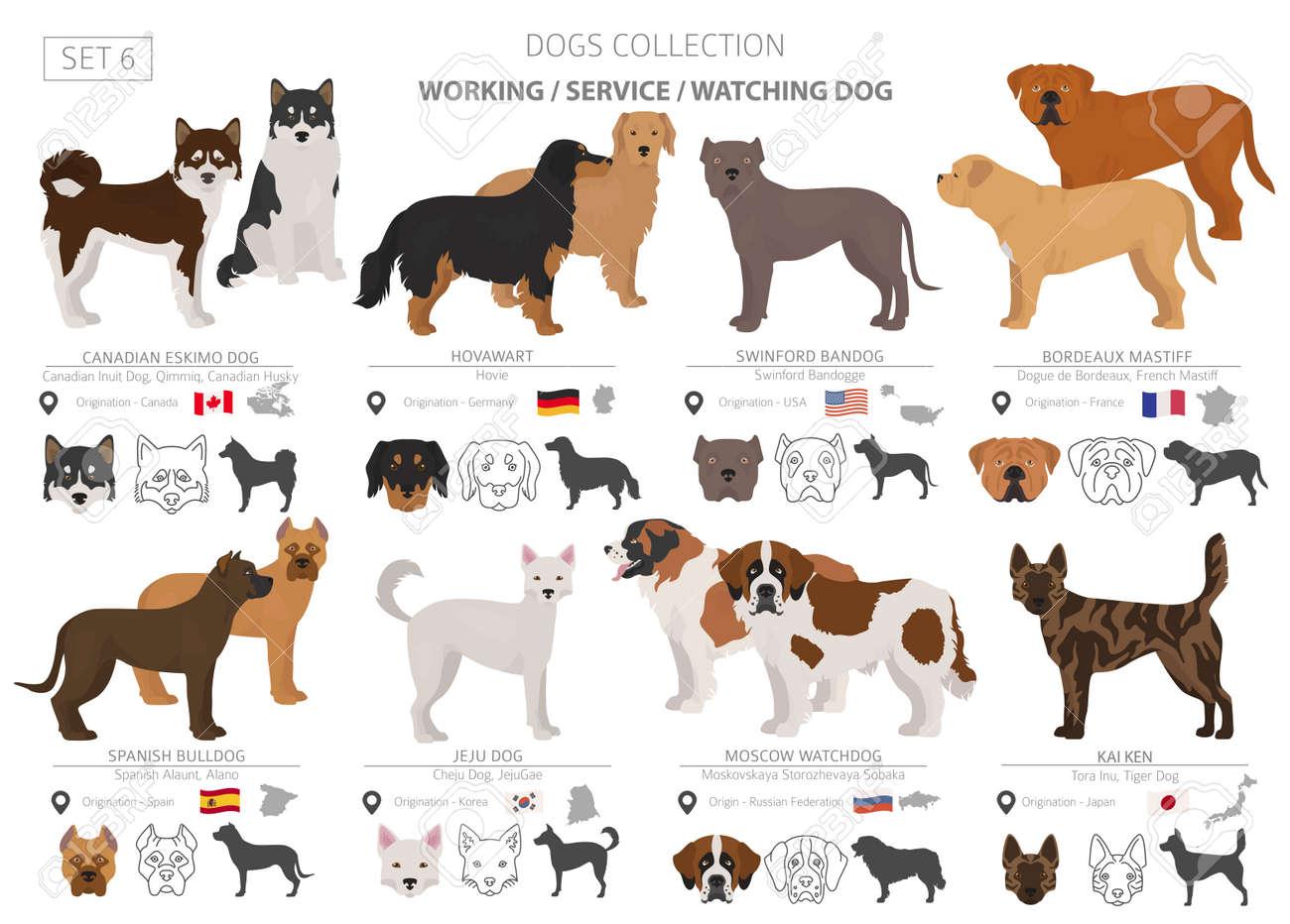 BANDOG BREEDERS CANADA - American Bandogge Mastiff Puppies