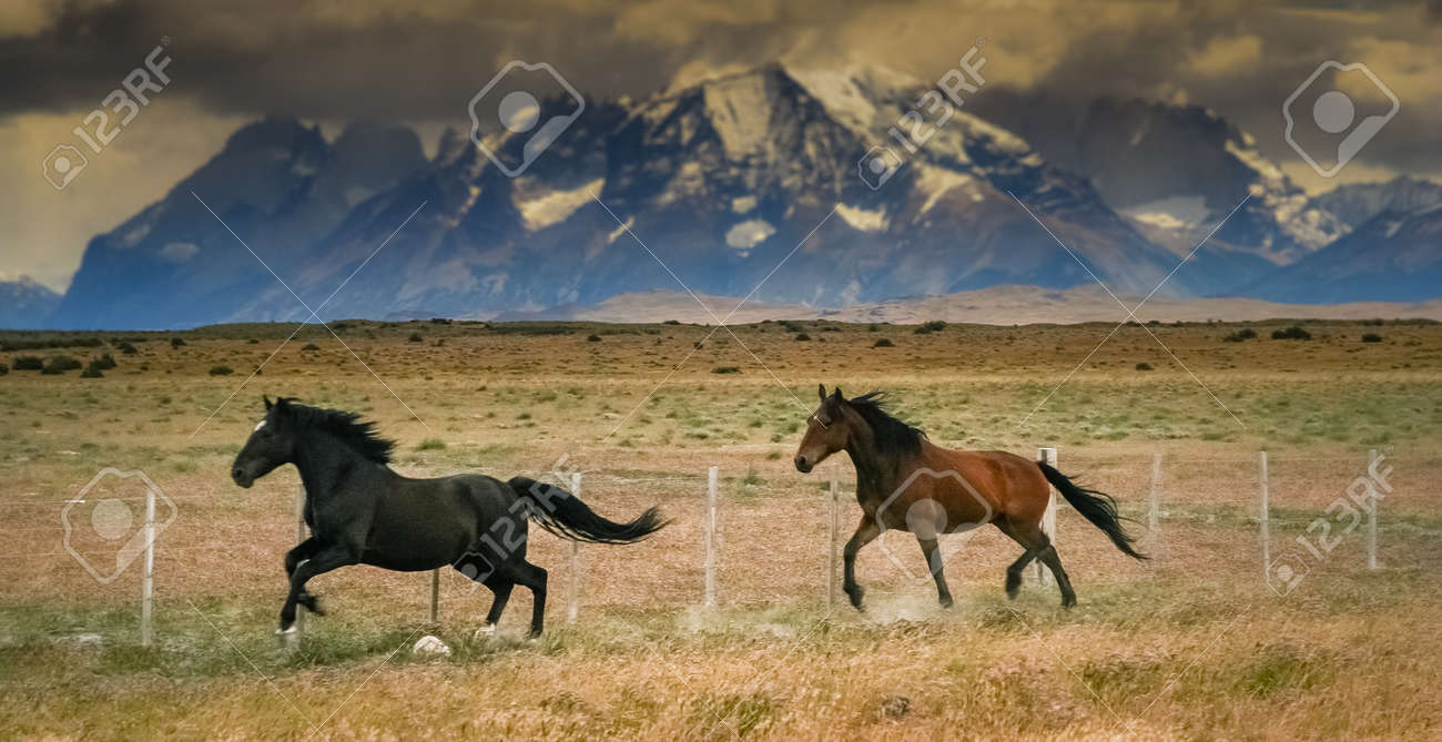 Wild horses running with the of Torres del Paine mountains in chilean Patagonia Stock Photo - 28078341
