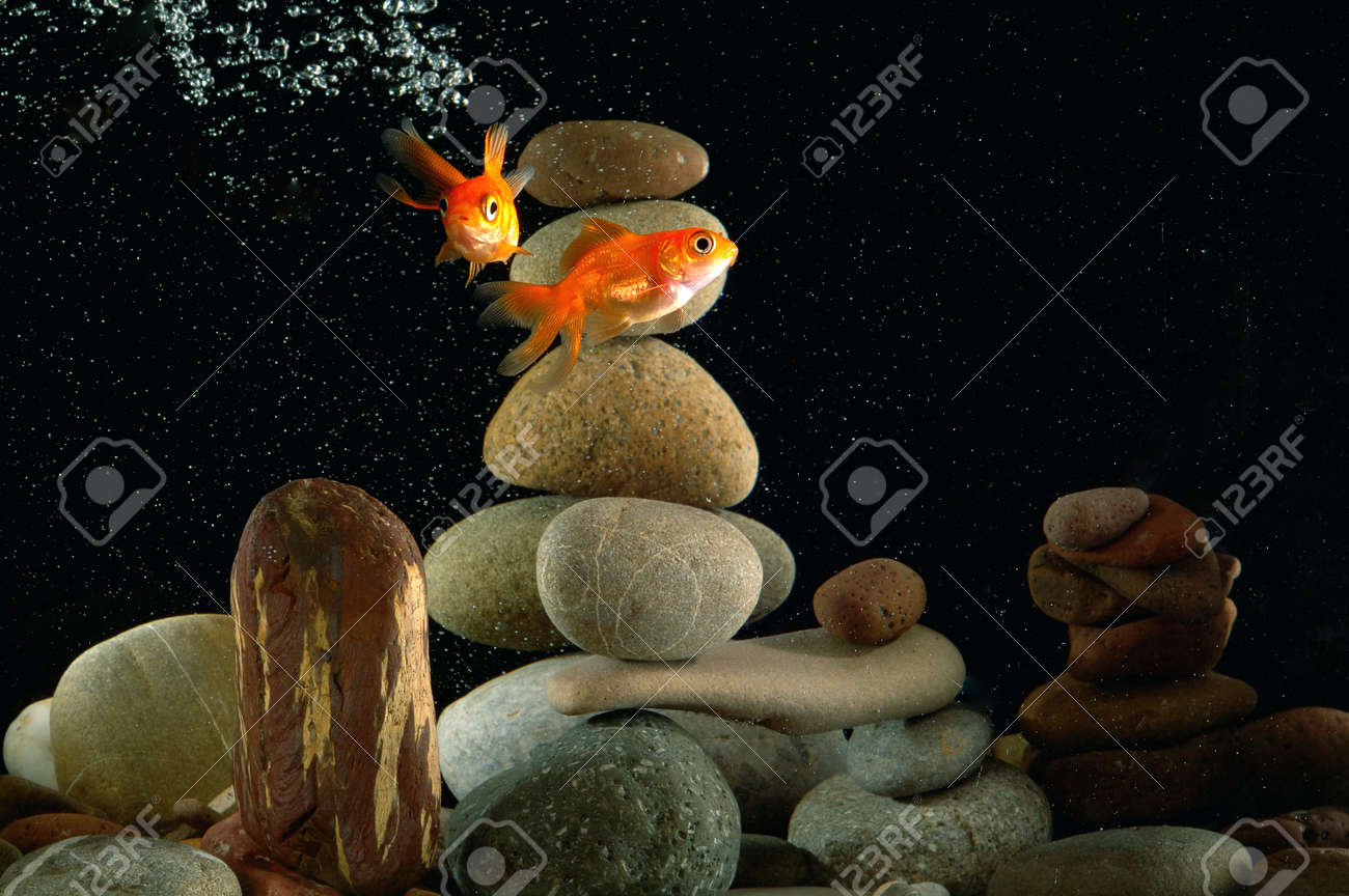 goldfish in aquarium over well-arranged zen stone and nice bokeh of bubbles Stock Photo - 13056816