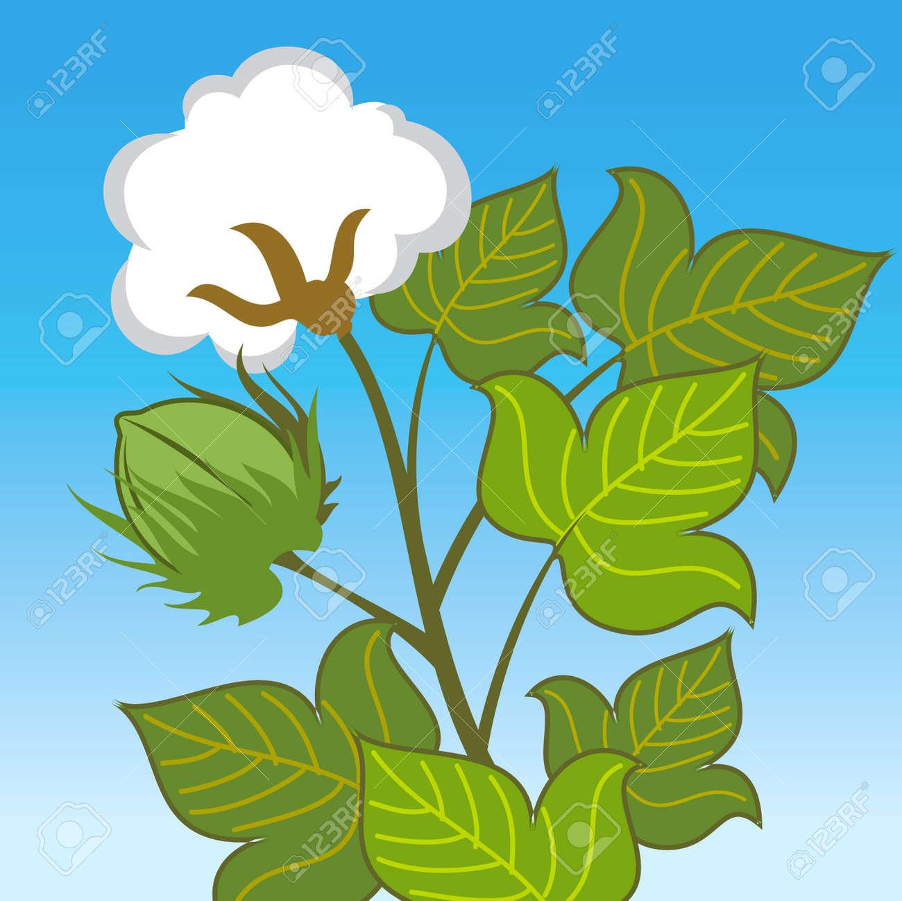 planta de algodón de cerca sobre fondo azul ilustraciones