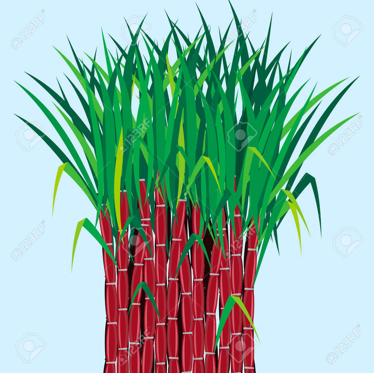 sugarcane plants grow in field royalty free cliparts vectors and rh 123rf com pongal sugarcane clipart sugar cane clipart black and white