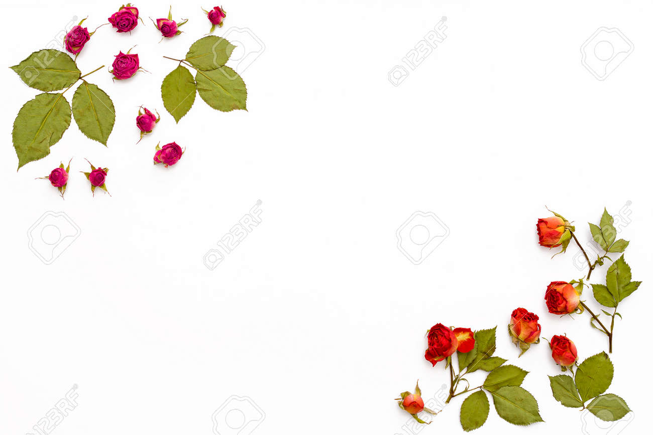 marco de rosas de flores sobre un fondo blanco modelo de flor para