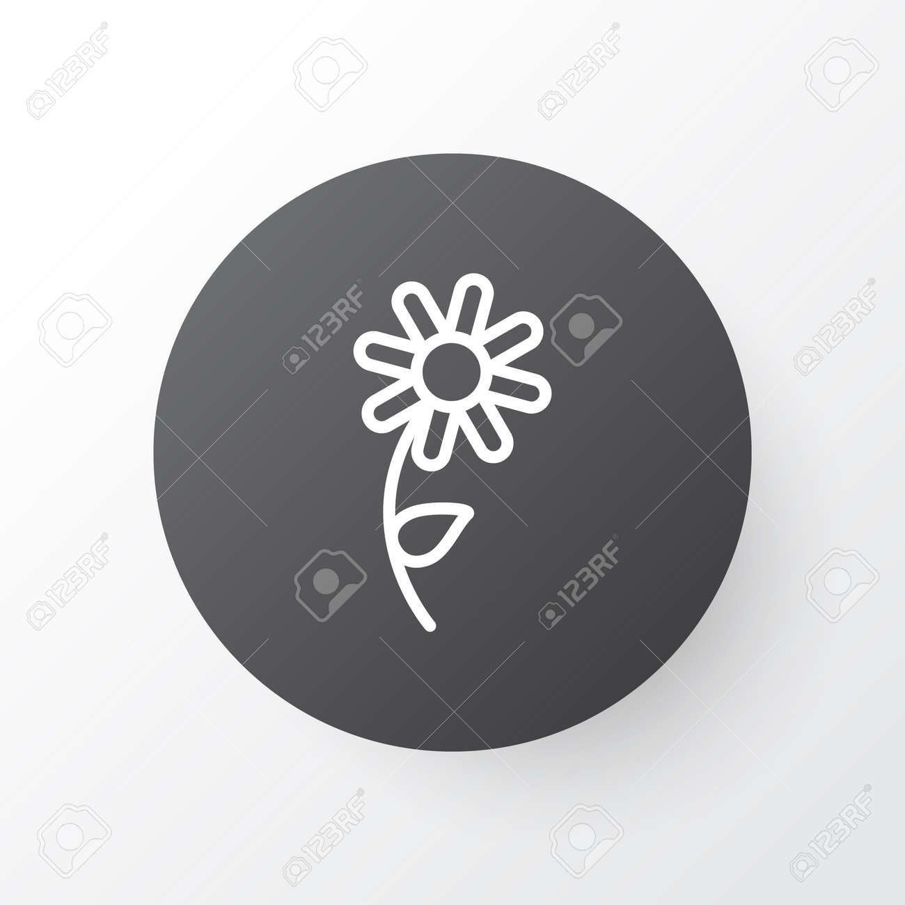 Daisy Icon Symbol Premium Quality Isolated Sunflower Element