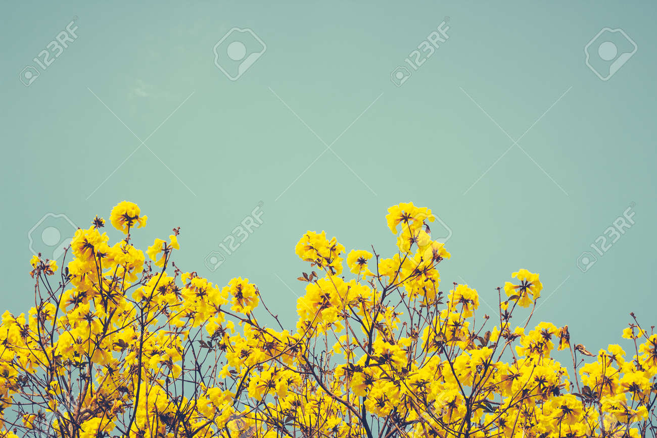 Yellow flowers on the blue sky background vintage style stock stock photo yellow flowers on the blue sky background vintage style mightylinksfo