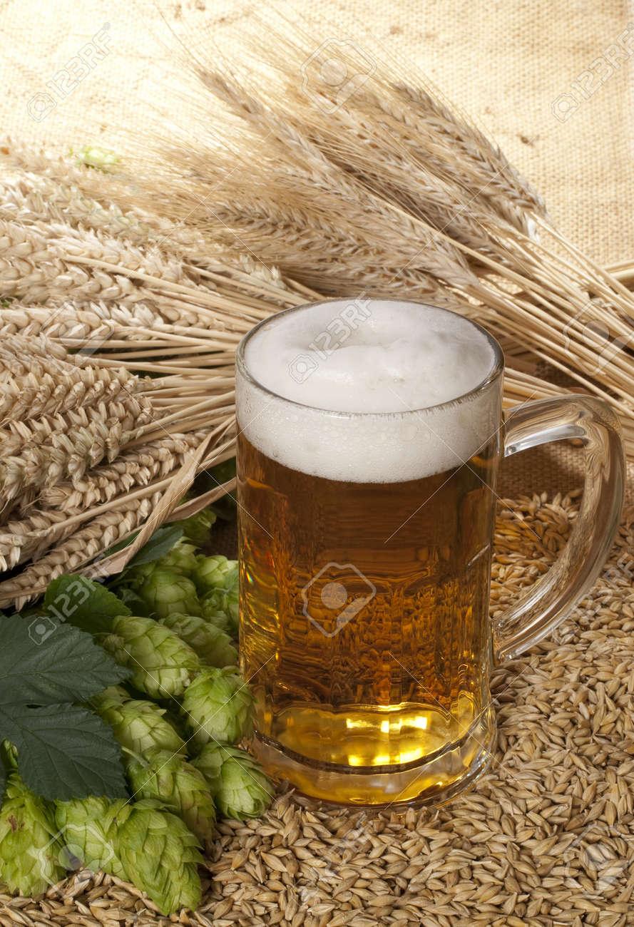 beer Stock Photo - 10600998