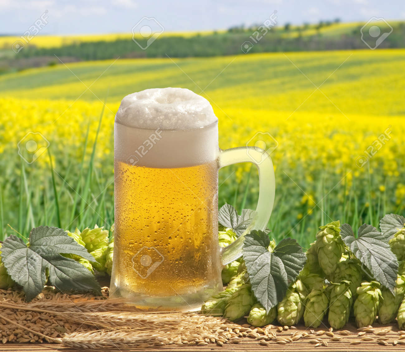beer Stock Photo - 13220098