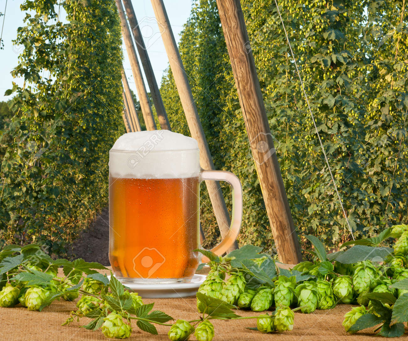 beer glass Stock Photo - 21951666