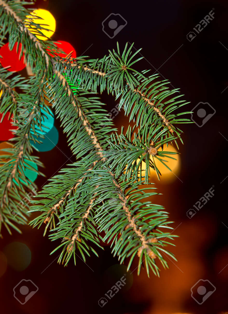 Twig Of Christmas Tree With Coloured Lights Stock Photo, Picture And ...