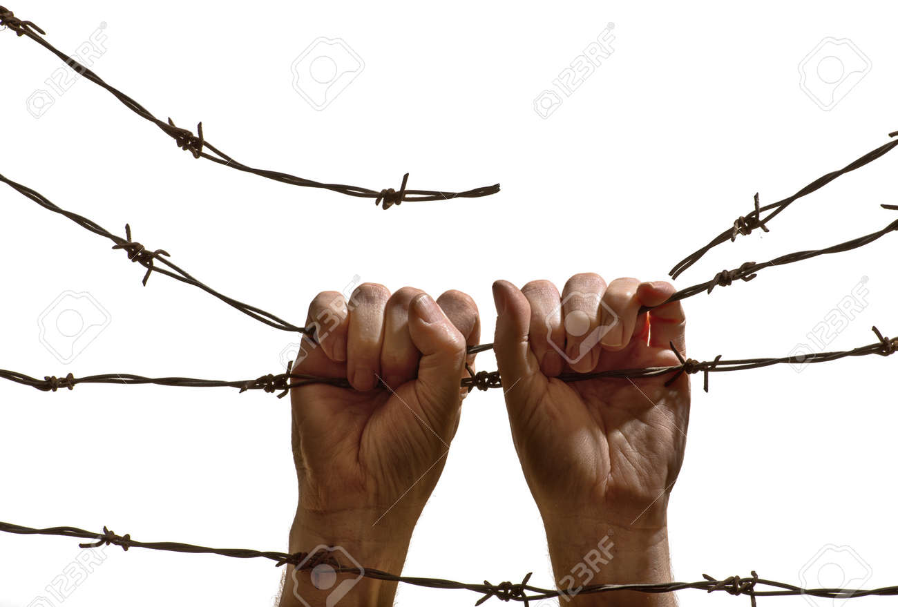 hands hanging on the barbed wire on the white background stock hands hanging on the barbed wire on the white background stock photo 36986802