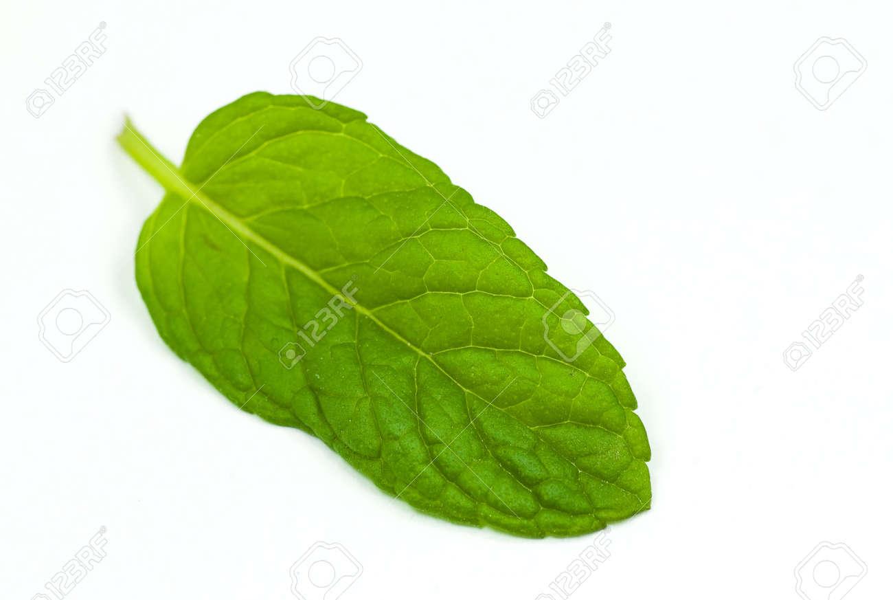 mint leaf isolated Stock Photo - 5228702