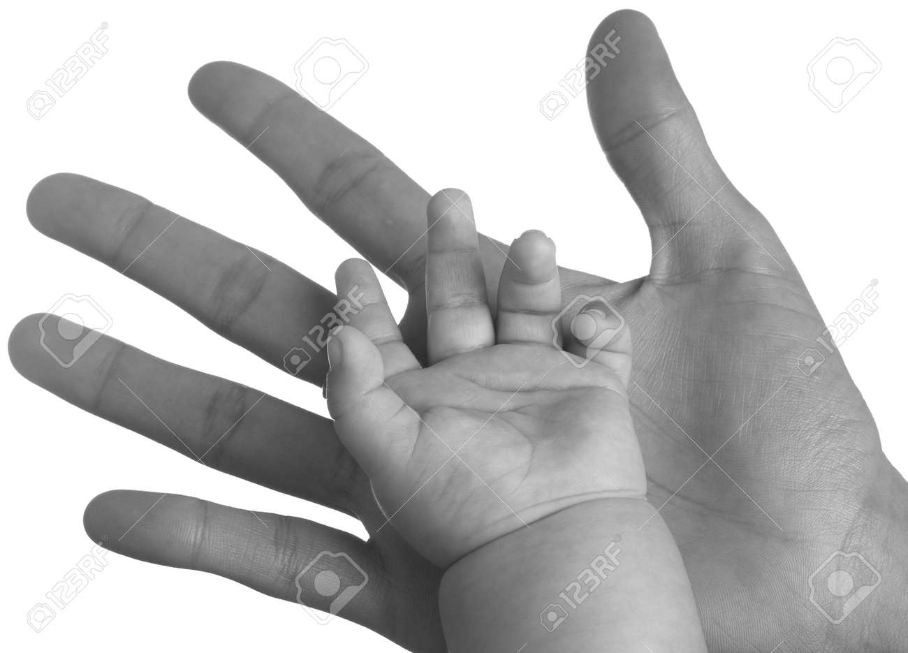 adult hand holding a baby hand closeup, black and white Stock Photo - 8413056