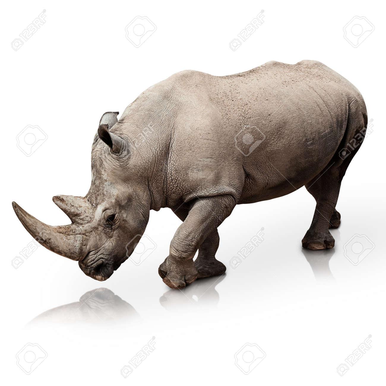 wild rhinoceros walking on a reflective surface Stock Photo - 10374020