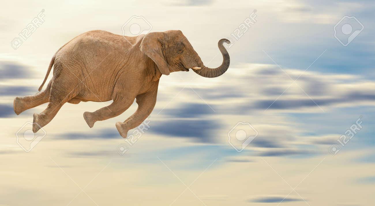 14438916-flying-elephant-outdoor.jpg