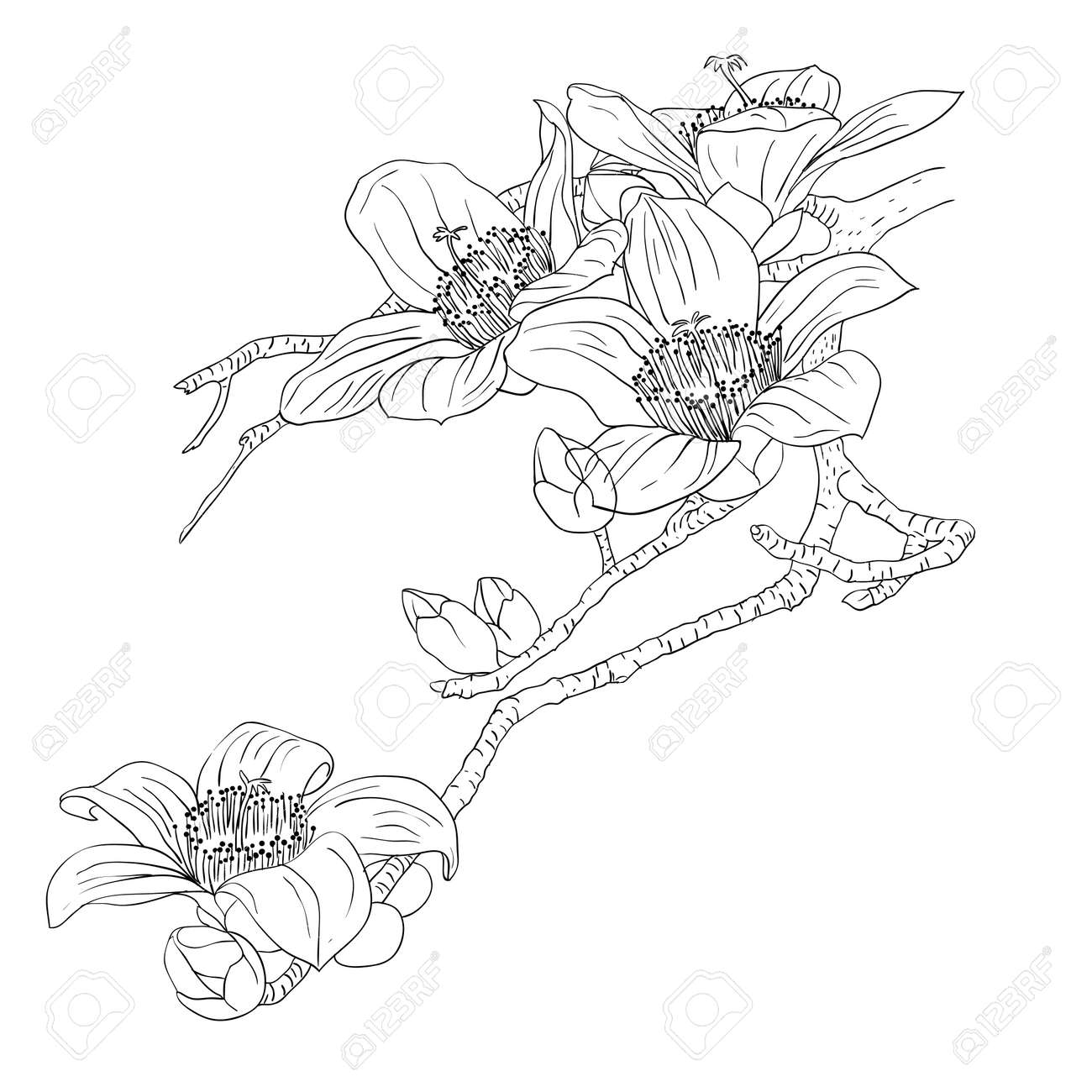 tender twig blossoming orchids on a light background Stock Vector - 9079657