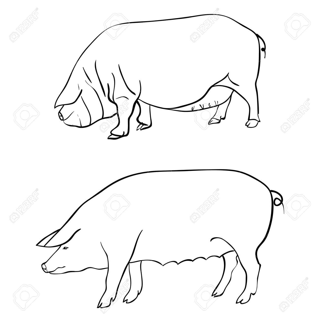 Pen drawing depicting a pig stock vector 10908213