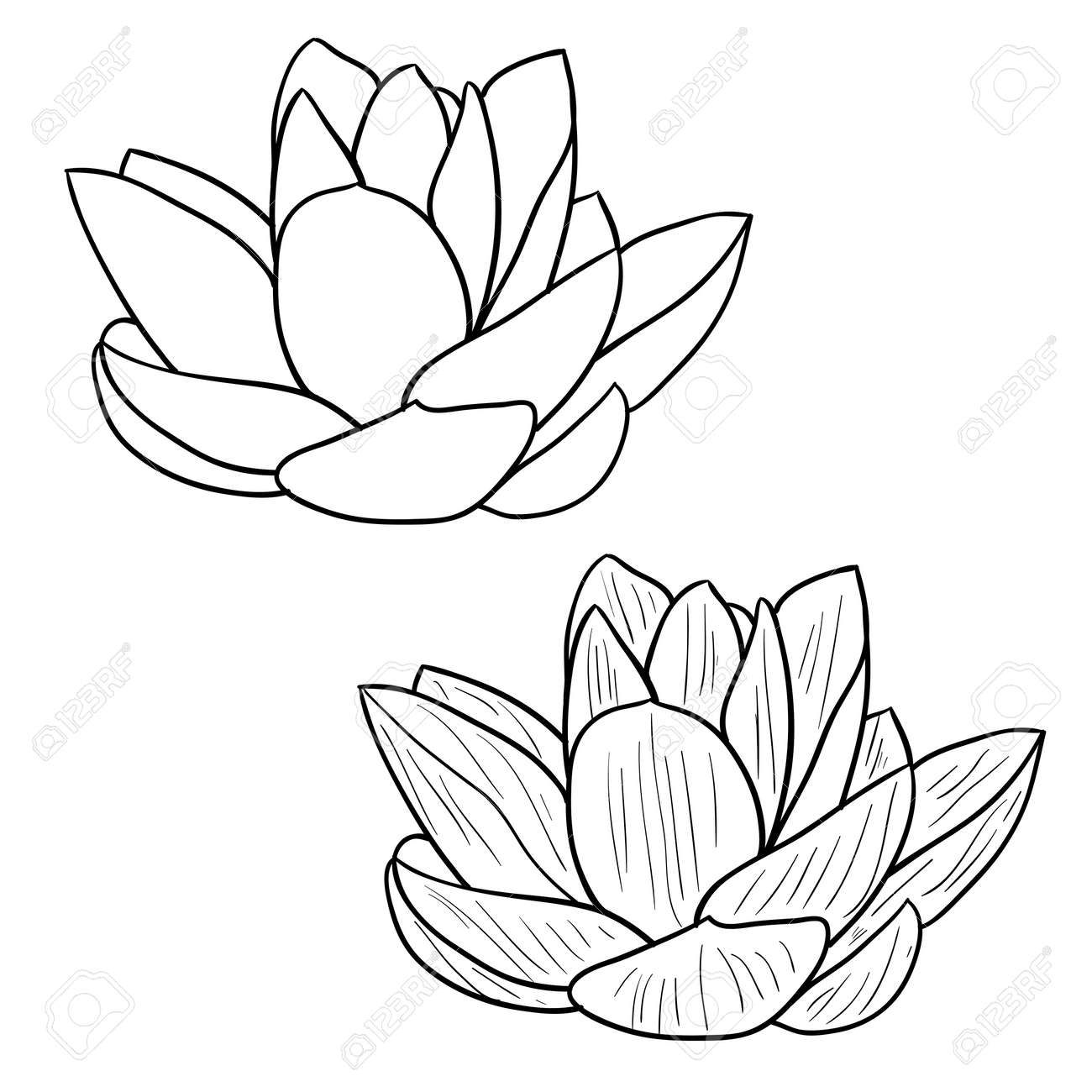 Oriental lotus - a flower Vector illustration. Stock Vector - 12481853