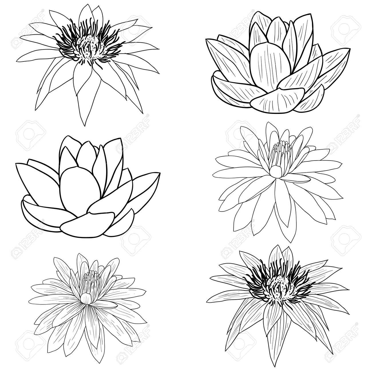 Yoga pattern background seamless pattern with five petals lotus flower - Lotus Flower Vector Oriental Lotus A Flower Vector Illustration