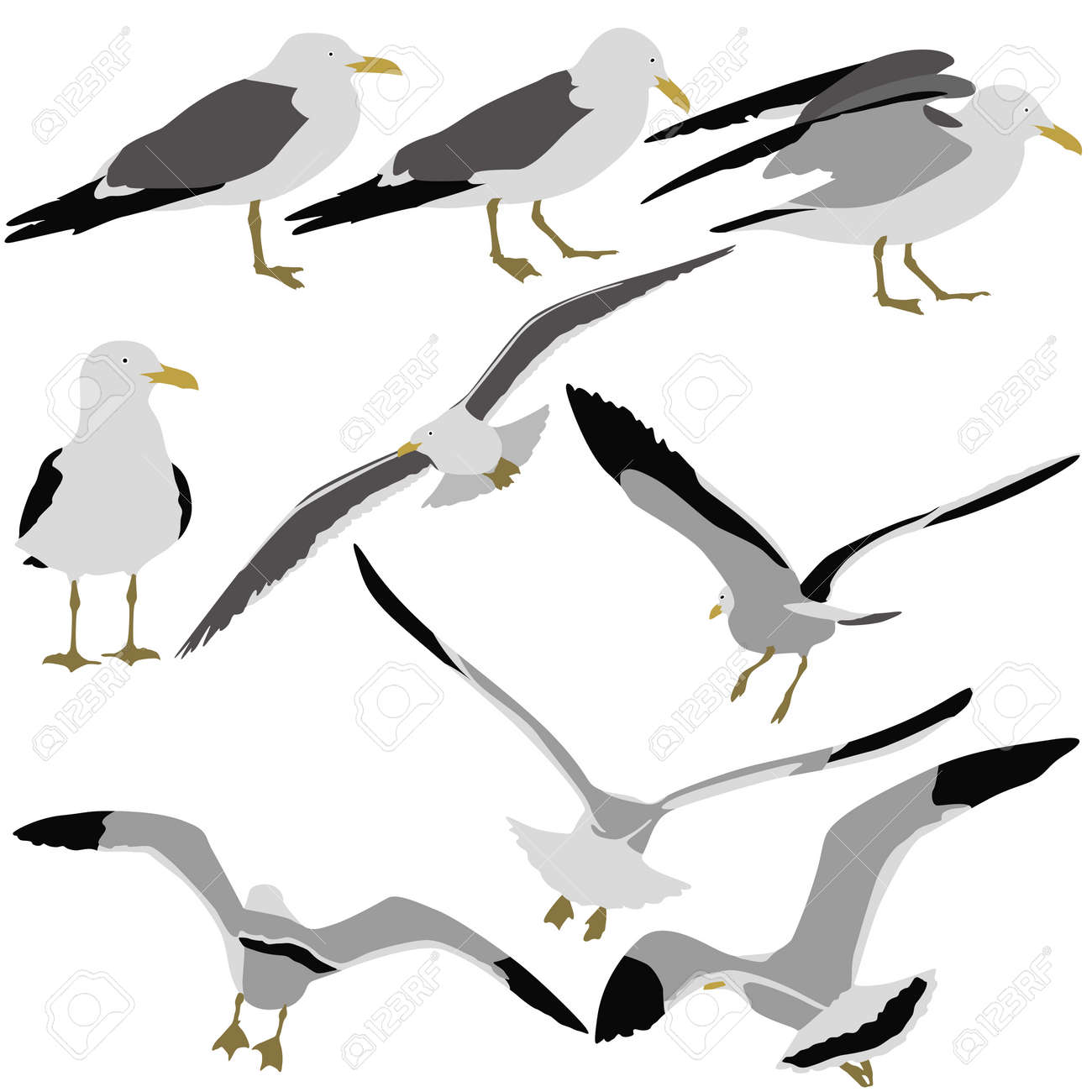 Set black silhouettes of seagulls on white background. Vector illustrations. - 31715605