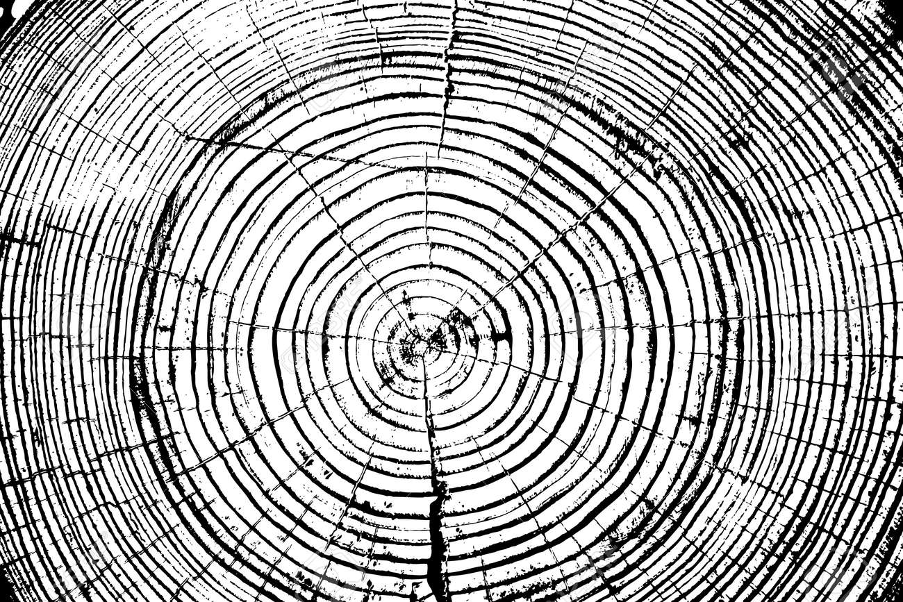 Tree rings saw cut tree trunk background. Vector illustration. - 35273067