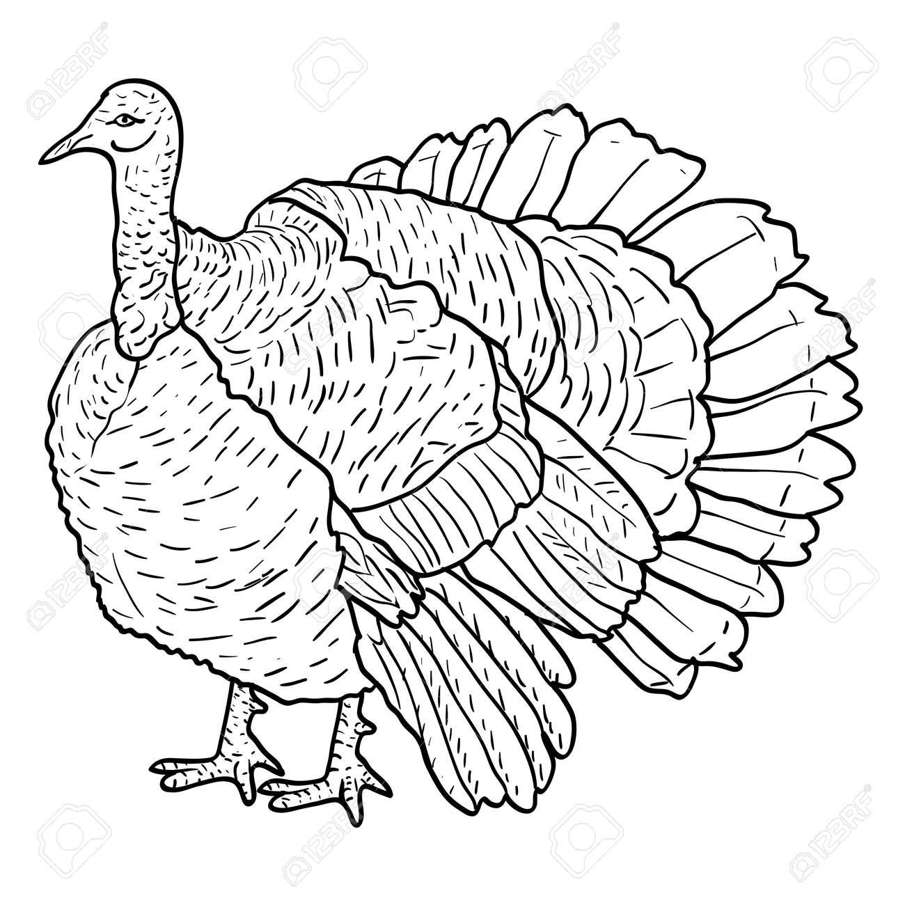 sketch black turkey on a white background vector illustration