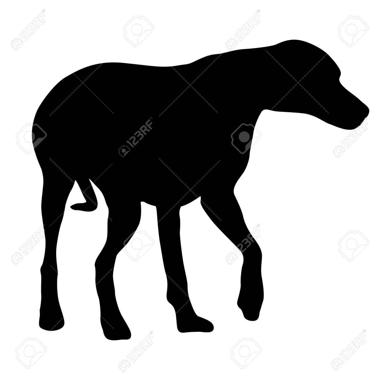 Doberman pinscher dog black silhouette on white background. - 159241404