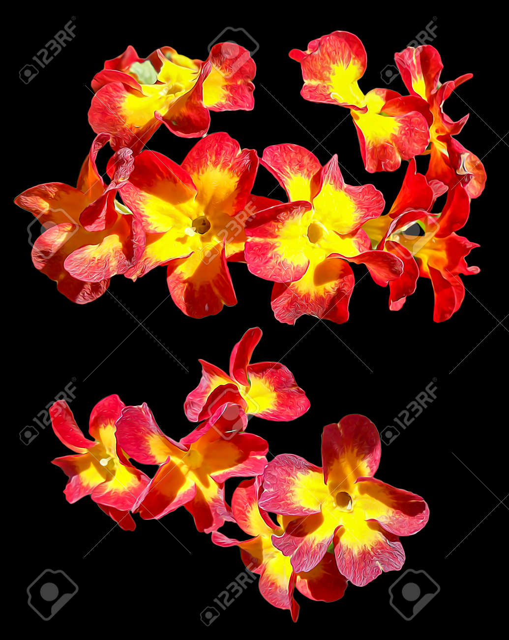 Oil Draw Petunia Flower Bright Flower In Perspective Fresh Stock Photo Picture And Royalty Free Image Image 59744587