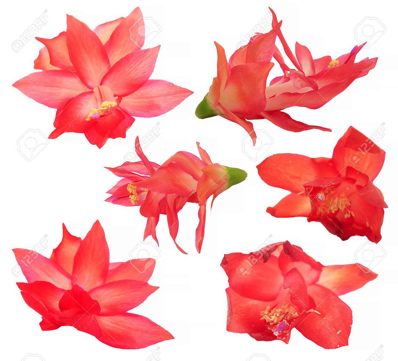 Huile Dessin Rouge Cactus Fleur Perspective Peinture Frais