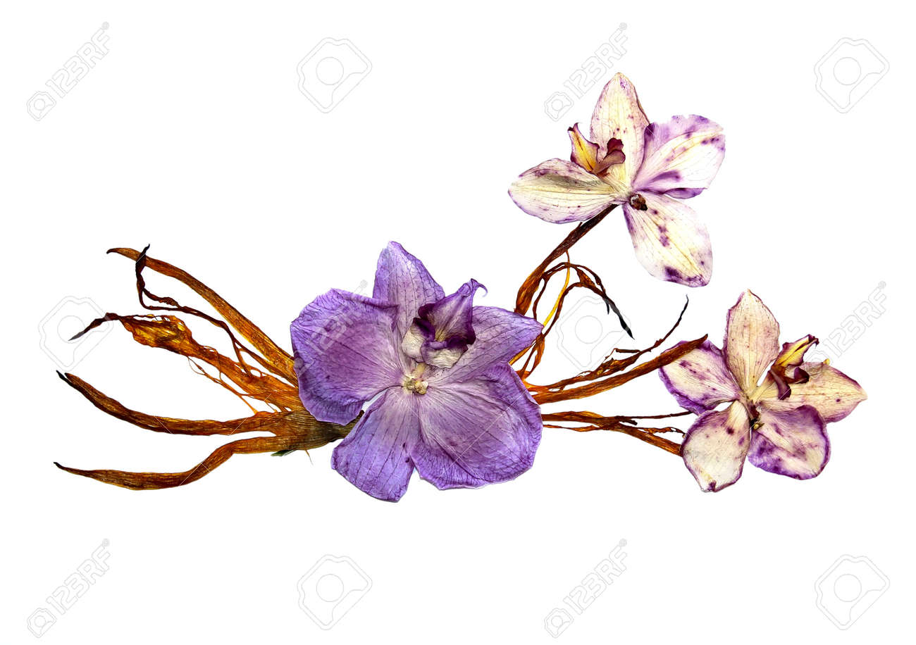 bizarre curved extruded dried lily petals pressed pink orchid