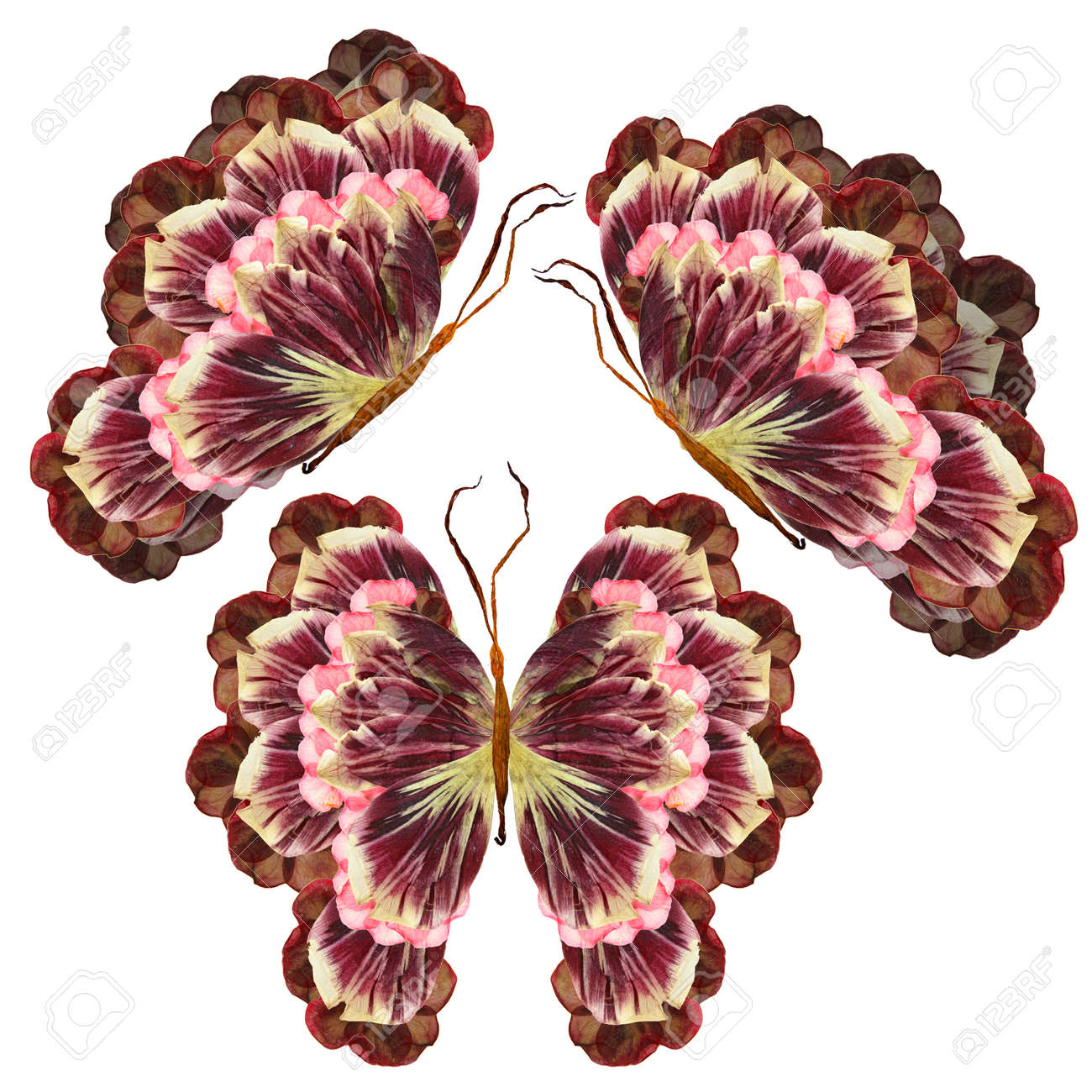 Floral Butterfly Made From Bizarre Curved Extruded Dried Lilydry