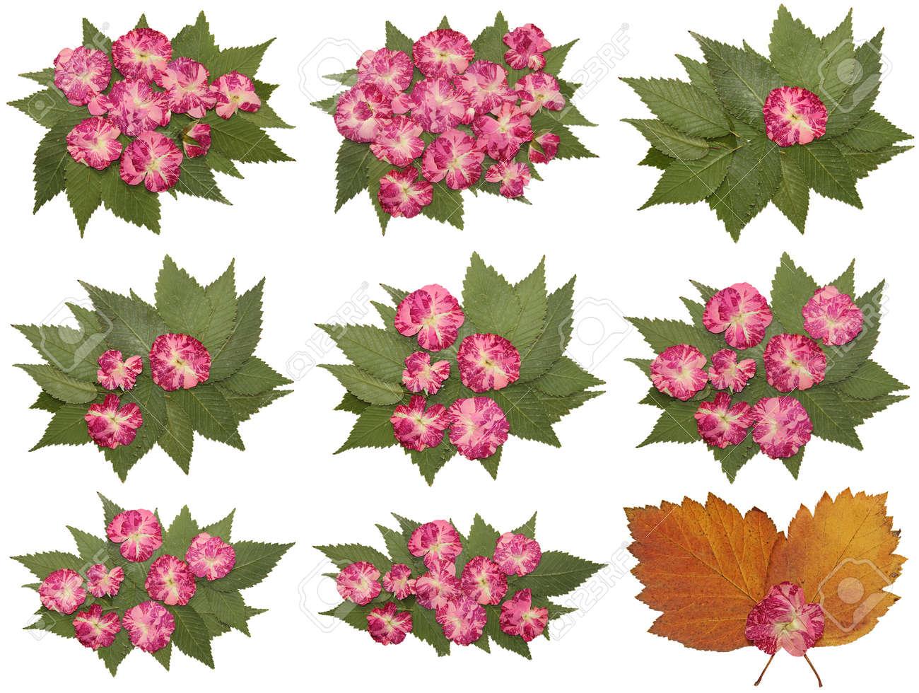 Lfarbe Trocken Herbst Blatt Der Rose Blume Isoliert Blatter Auf