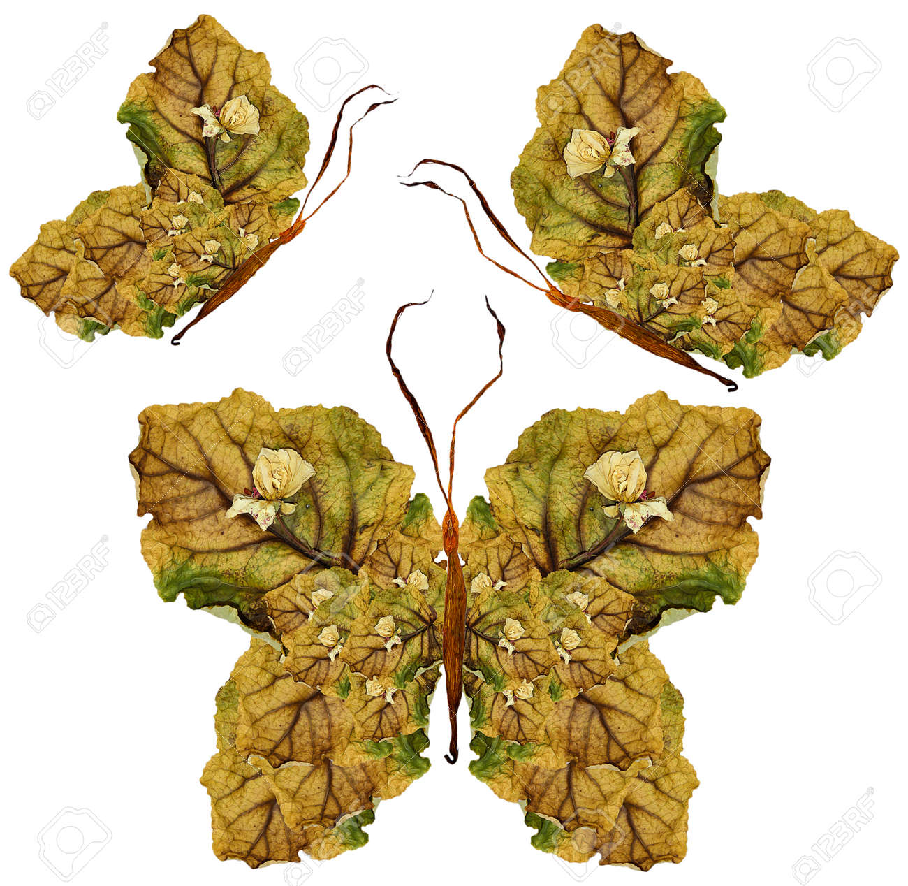 Floral butterfly made of bizarre curved lily petals pressed stock floral butterfly made of bizarre curved lily petals pressed dry leaves and flowers stock photo izmirmasajfo Gallery