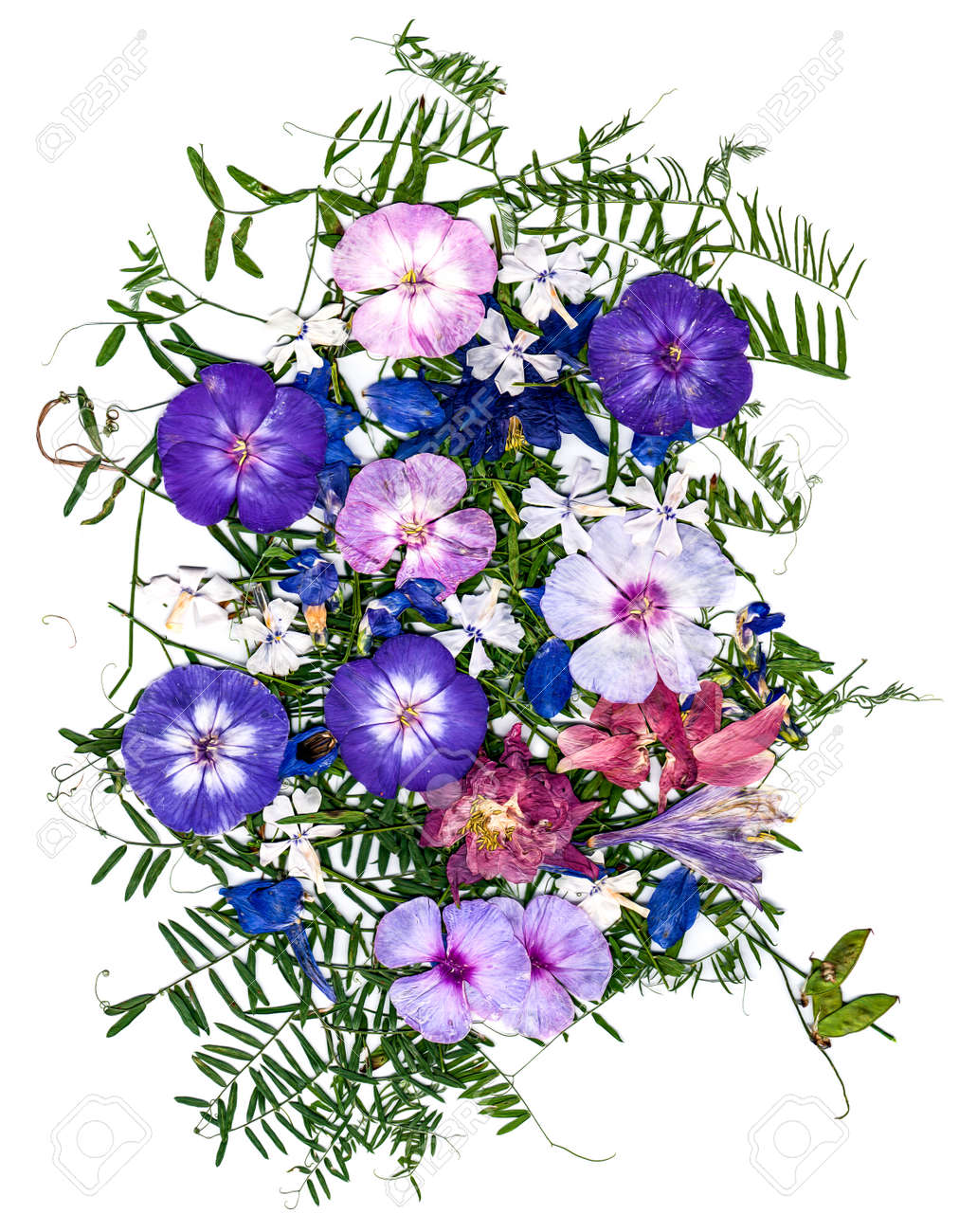 Application Bouquet Of Dry Flowers Stock Photo, Picture And Royalty ...