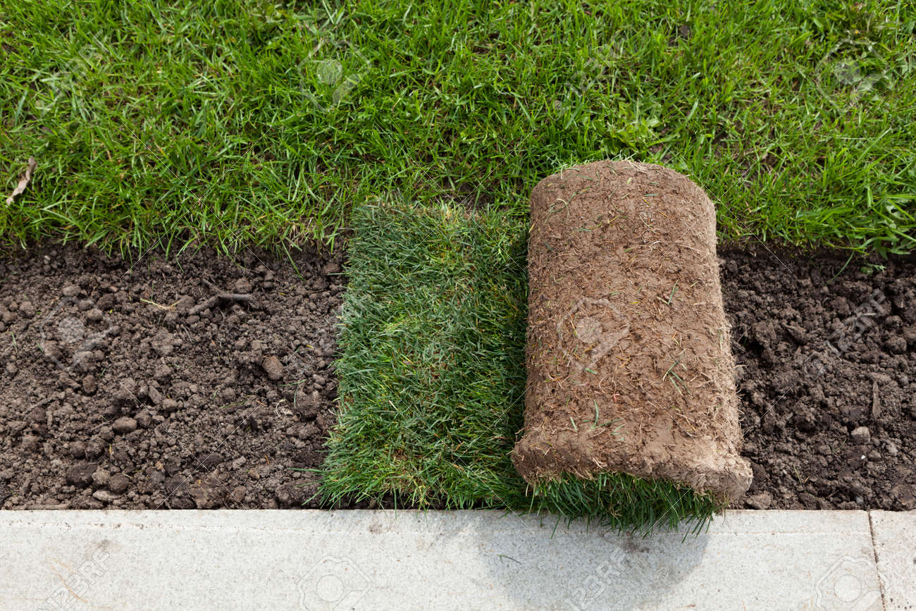 Rolls of turf or turfgrass, close-up. Landscaping of territory in the park. - 169663811