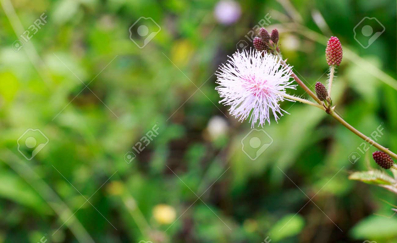 touch sensitive plant