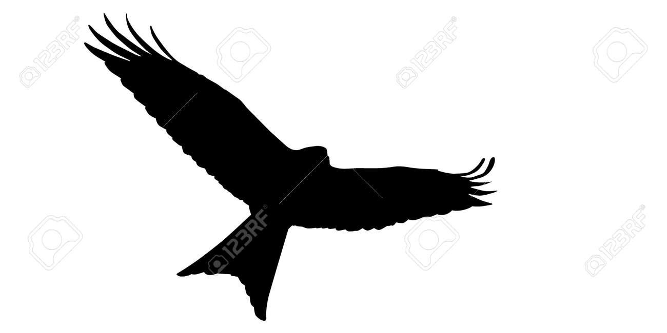 Red Kite, Milvus Milvus, Silhouette - 59069862