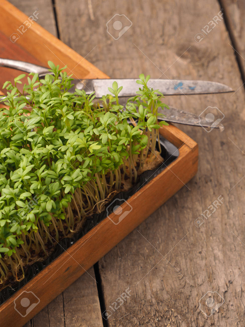 Organic Cress In A Wooden Box On An Old Rustic Wooden Garden.. Stock ...