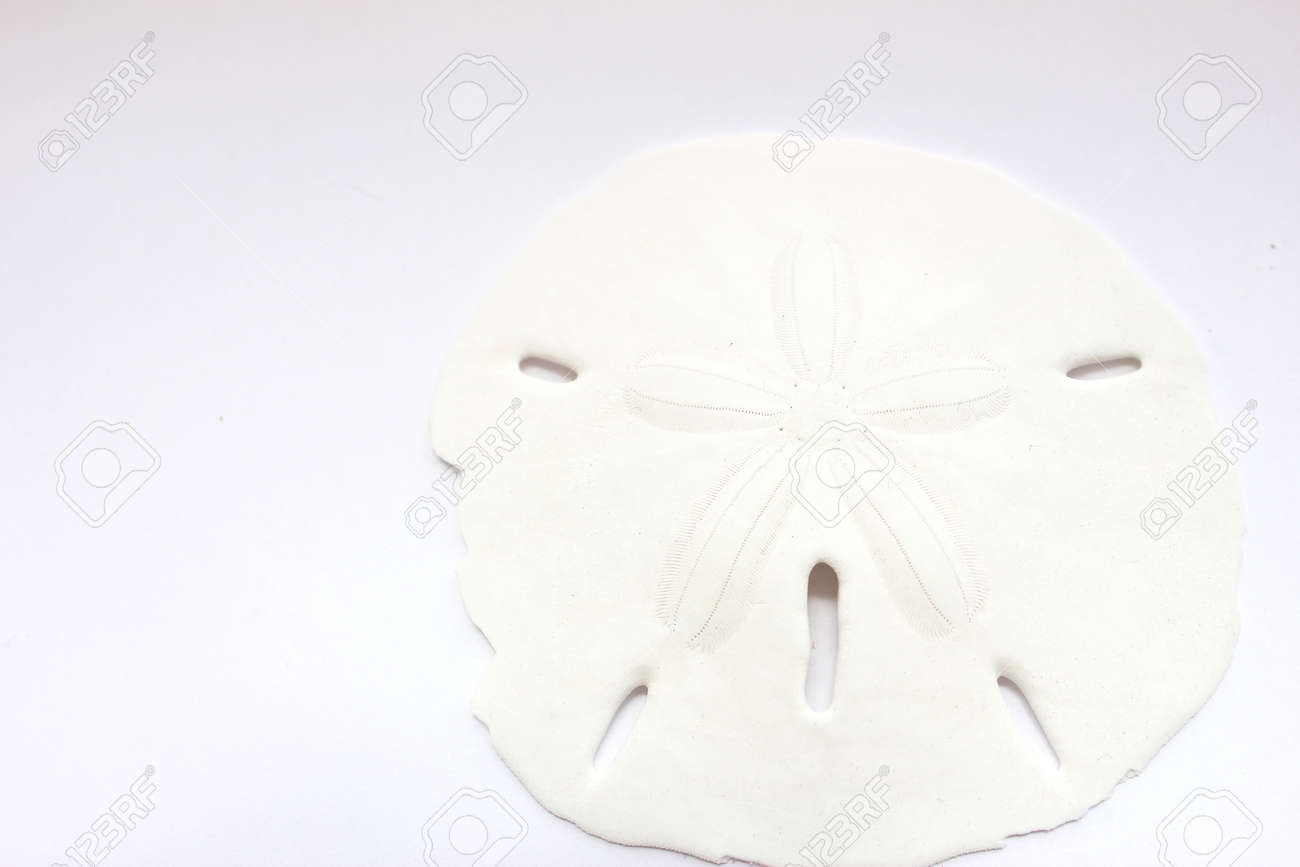 sand dollar stock photo picture and royalty free image image 13796280