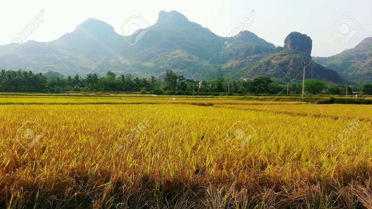 A paddy field near a mountain, Nagercoil, Tamil Nadu, India