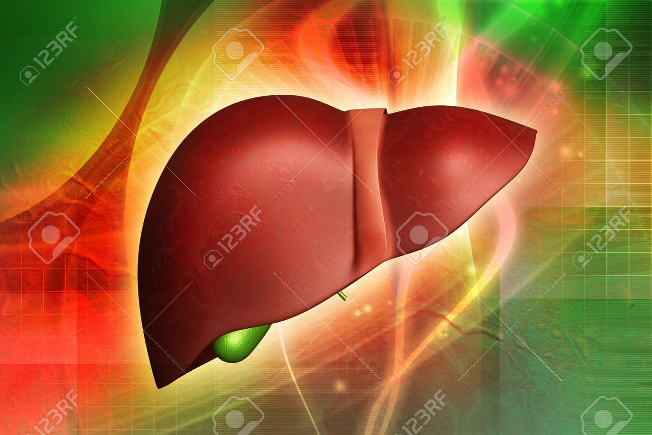digital illustration of a human liver Stock Photo - 14076518