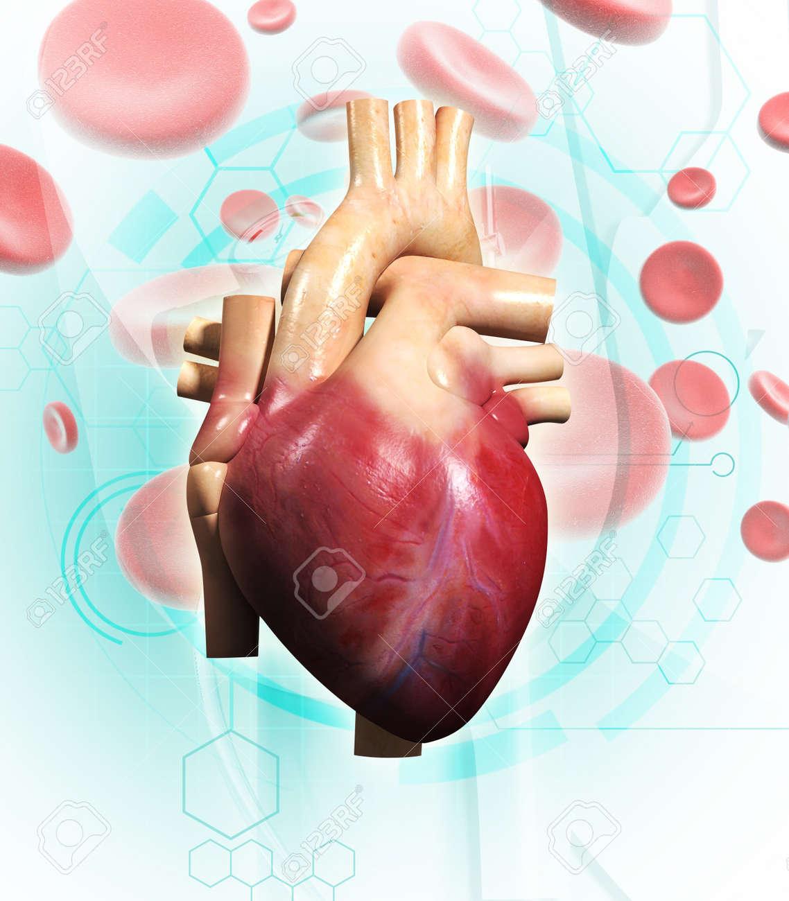 Digital illustration of  human heart  in colour background Stock Illustration - 14076625