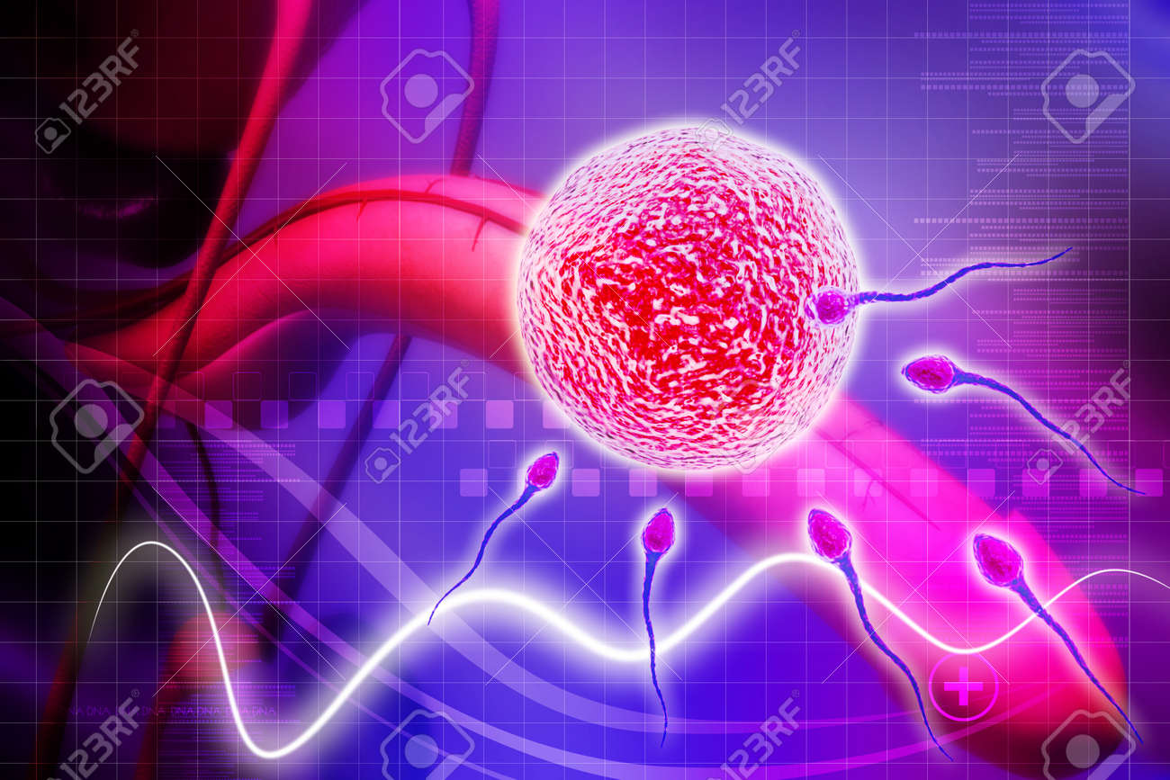male reproductive system in digital background Stock Photo - 21057276