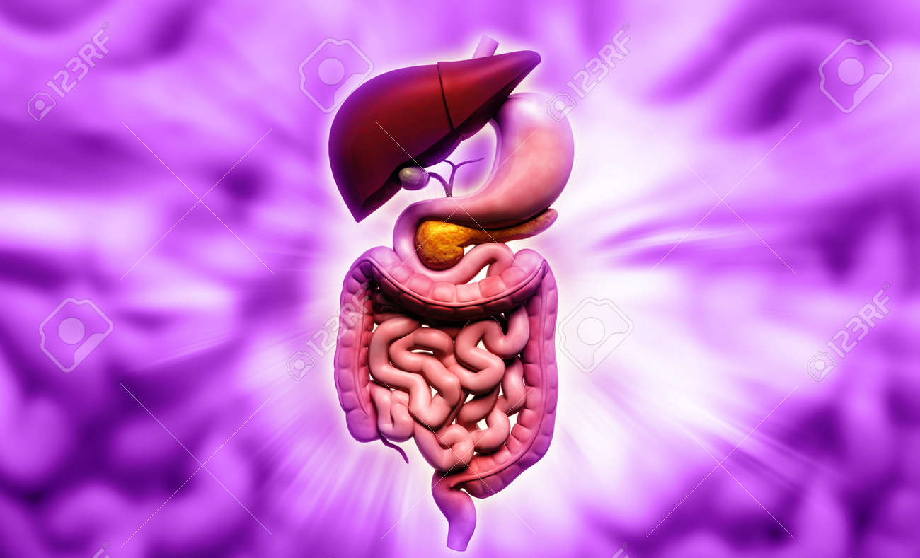 Digital illustration of human digestive system in colour background Stock Photo - 21199982
