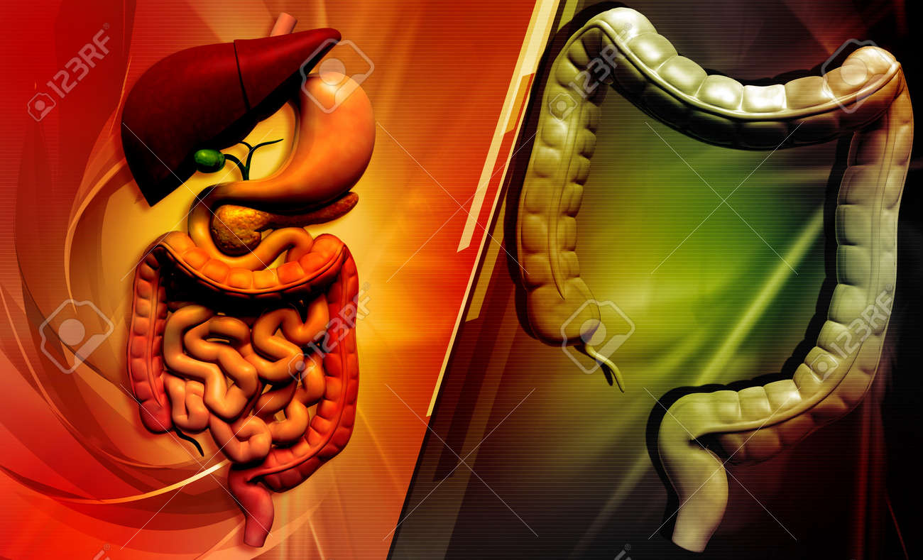 Digital illustration of human digestive system in colour background Stock Illustration - 21788149
