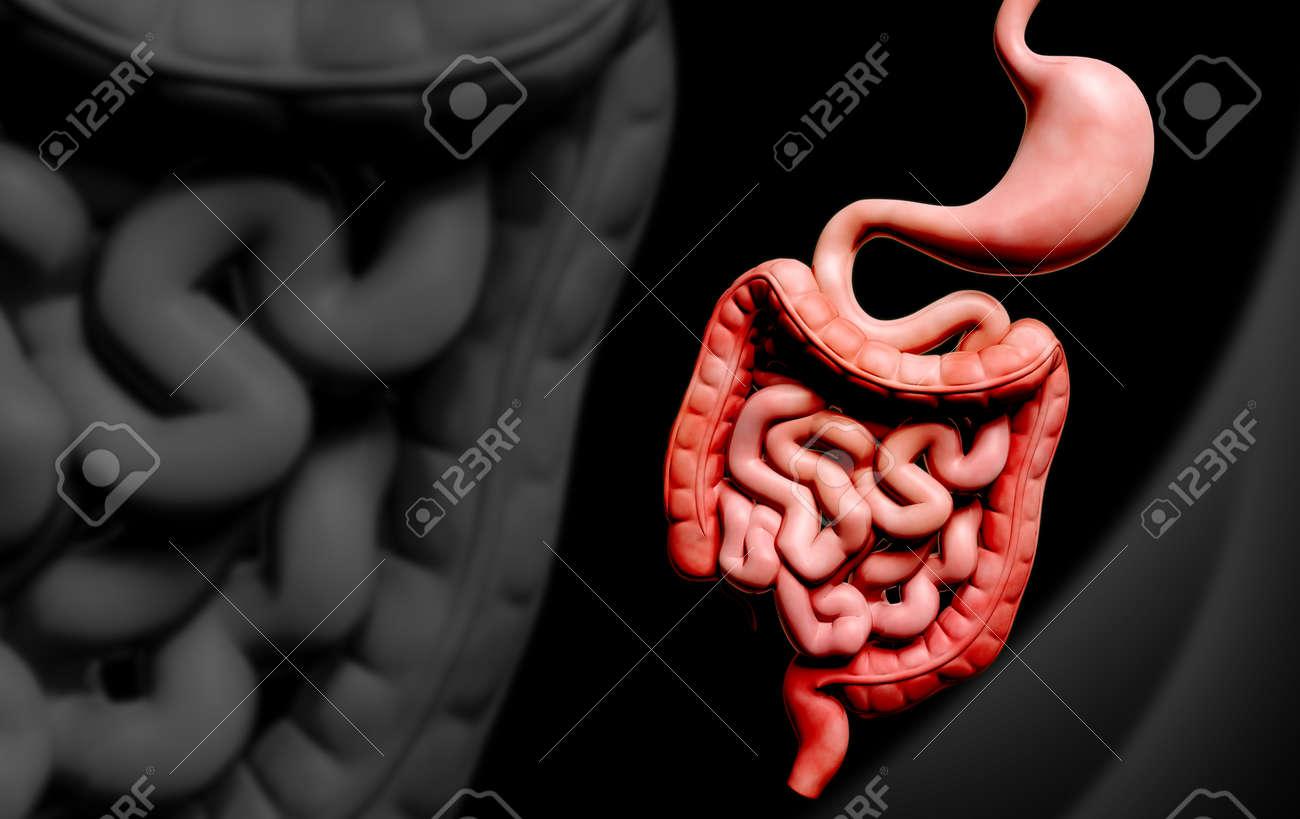 Digital illustration of human digestive system in colour background Stock Illustration - 22887396